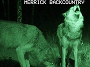 Merrick Backcountry Video: Wolf Tested