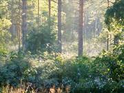 Four Seasons - Vivaldi & Perfect Summer