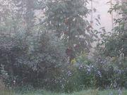 Kevin MacKleod - Sonata 17 and the Morning Mist