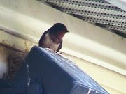Swallows - The Male Defends The Nest