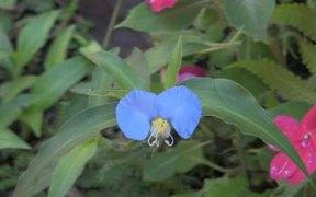Flower in Macro