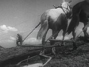 Building a Levee With Mule-Power