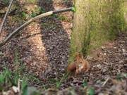 Squirrel Action in Forest