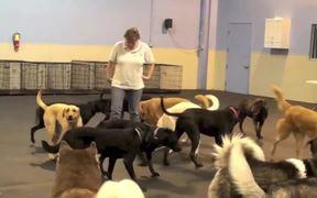 The Dog Gurus - Hula Hoop
