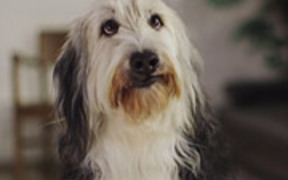 Castor & Pollux Commercial: Reading Dog