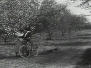 Girls In Orchard With Bikes