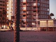 Almería Palm Timelapse