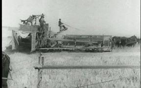 Horse Drawn Harvester