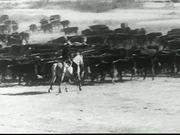 Western Cattle Sequence
