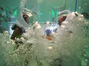 TechnoMarine Commercial: Underwater Nightclub