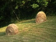 Round Bales With Rabbit