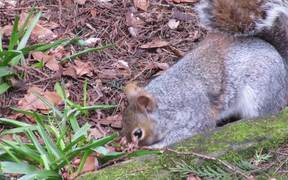 Watching a Feeding Squirrel