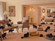 Loto Libanais Video: Black Cats on Holiday