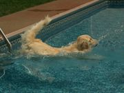 Bailey Swims