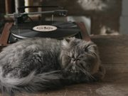 Pepe Jeans Commercial: Authentic Vintage Cat