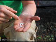Planting Seeds and Using Plug Trays
