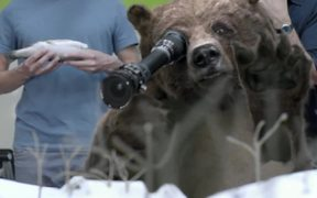Canal + Commercial: The Bear