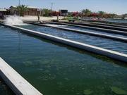 Demonstration of OriginOil's Aquaculture Process