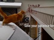 GSA Campaign: Patience: The Short-cut-cat!