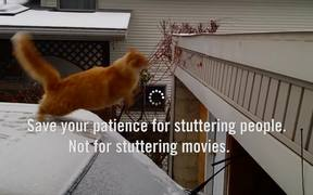 GSA Campaign: Patience: The Short-cut-cat!