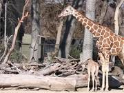 Babies At The Fort Worth Zoo