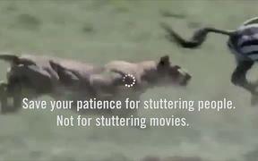 GSA Campaign: Patience: Zebra Attacks Lion