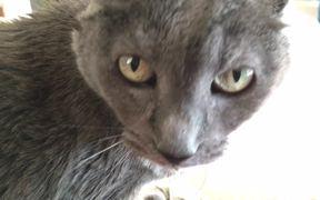 Nodding Cat