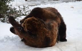 A Pair Of Playful Bears