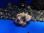 Visiting Sunshine Aquarium 2
