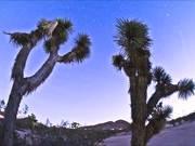 Cactus Time Lapse