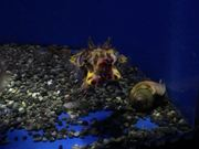 Aquarium Life 3