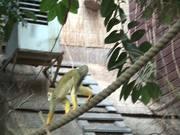 Small Monkey II