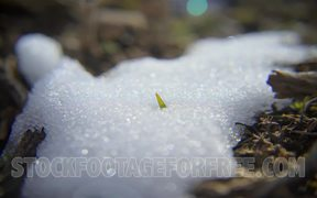 Snow Melting to Spring