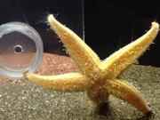 Aquarium Life 6