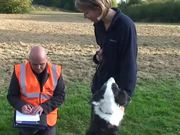 Dog Watch - Raw Footage - Lindsay Jelley