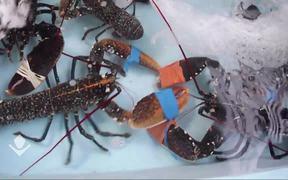 Crab Boxing