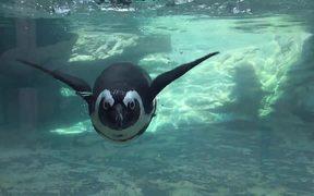Aquarium Life 5