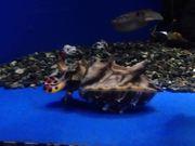 Aquarium Life 2