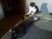 Funny Cat Part 3