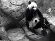 Smithsonian's National Zoo: Panda-Mum&Panda-Kid
