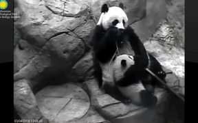 Smithsonian's National Zoo: Panda-Mum&Panda-Kid
