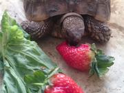 Slow Food - Crusher vs giant strawberry