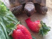 Slow Food - Crusher vs giant strawberry
