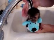 Baby Monkey Nala Gets a Bath